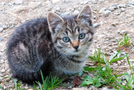 Hoftiere am Bauernhof Blankgut in Wagrain, Bauernhofurlaub im Salzburger Land – Katzen