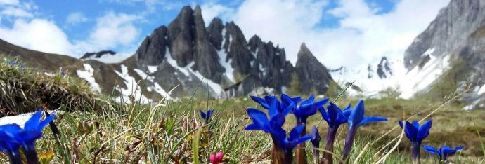 Impressum Blankgut in Wagrain - Urlaub am Bauernhof im Salzburger Land