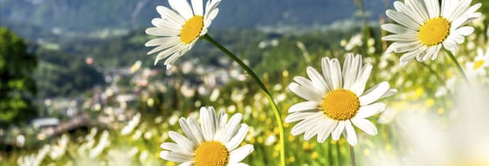 Kontakt & Anfahrt zum Blankgut in Wagrain, Bauernhofurlaub in Salzburg