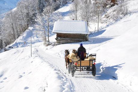 Winterurlaub in Wagrain, Pferdeschlittenfahrten
