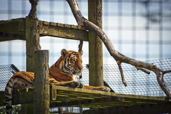Ausflugsziel Zoo & Tierpark